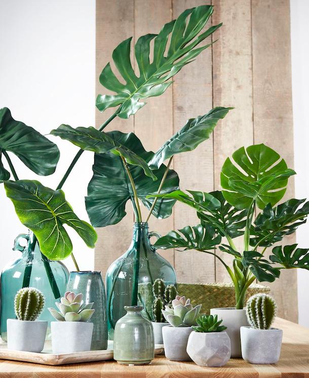 Pin Op Garden And Plants