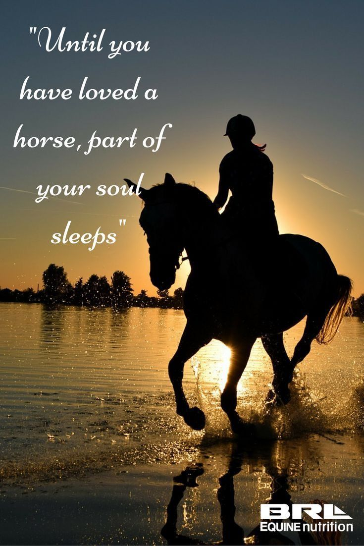 Fashion style Love Horse quotes and sayings pictures for lady