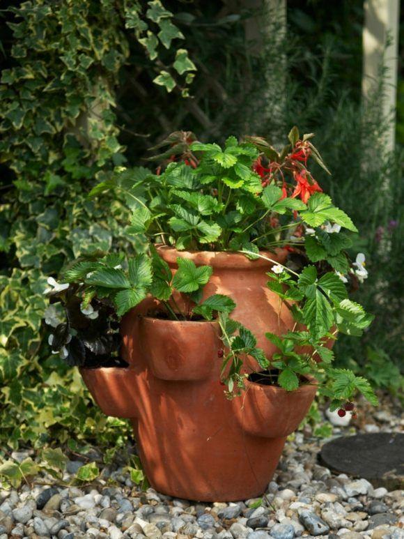 pot de fleur terre cuite - parfait pour la déco de jardin