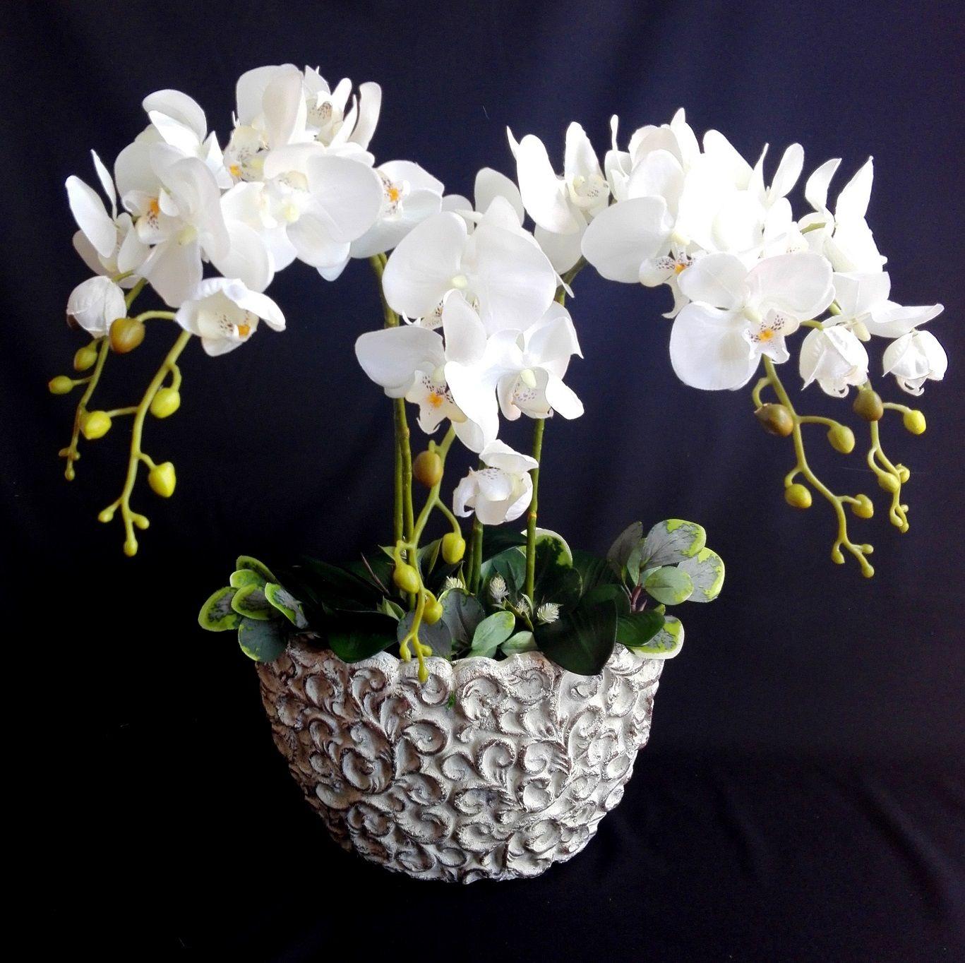 Bialy Storczyk W Donicy Swiateczne Atelier Floral Arrangements Floral Arrangement