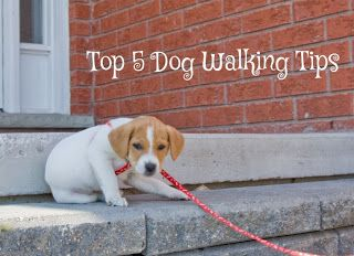 Pin By Kayden Gh On Projects To Try Dog Walking Pet Care Pet