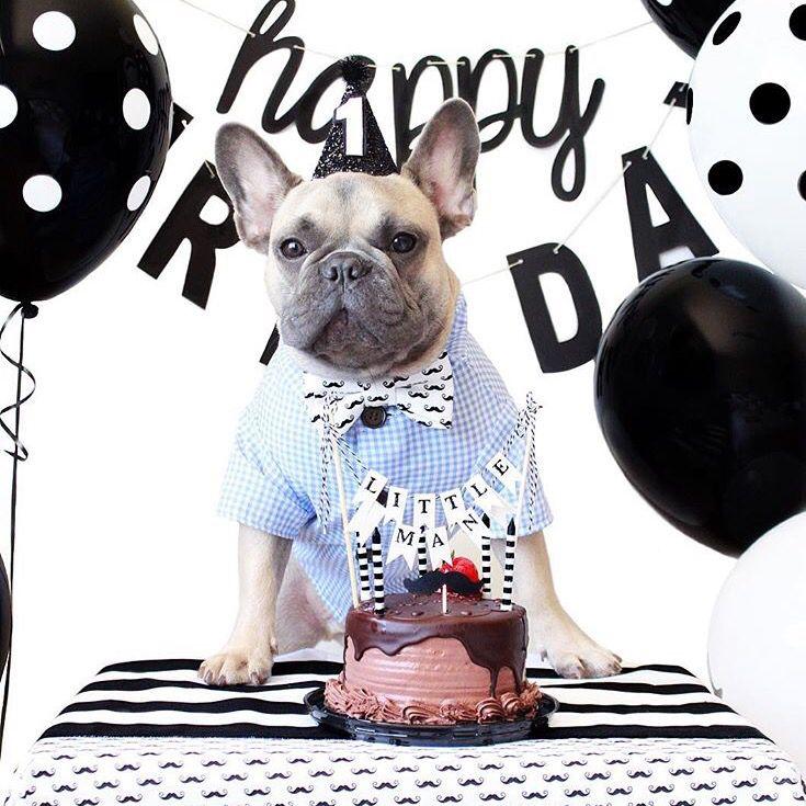 Frenchie Dog Birthday Party