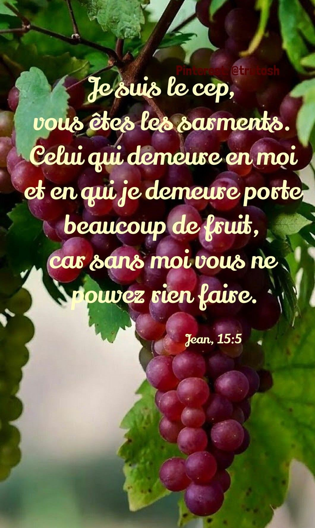 Épinglé par Rita Rathod sur French Bible | Fruit