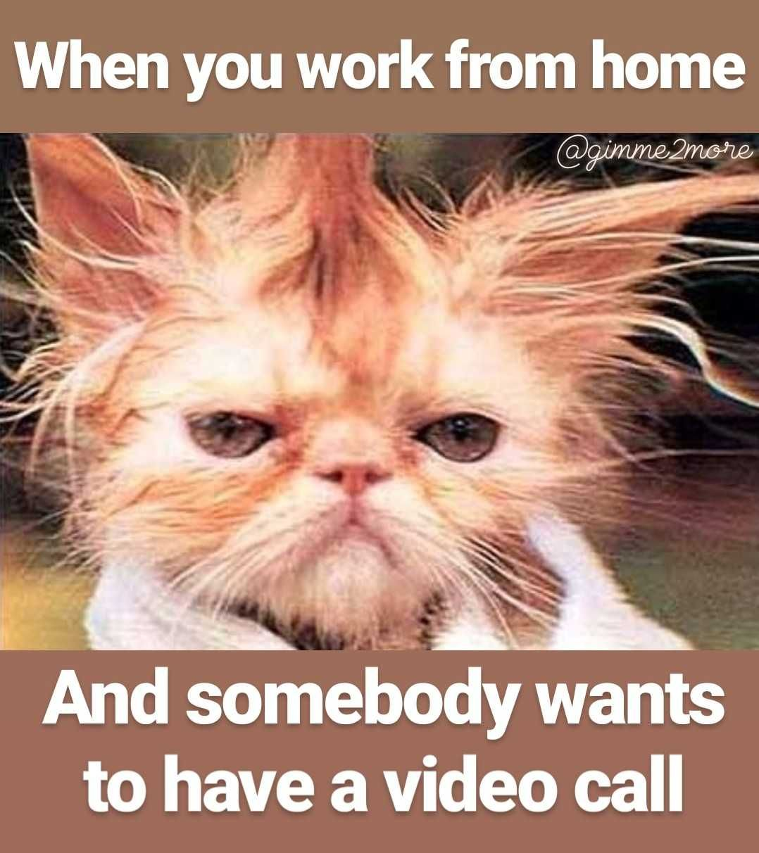 Not Everyone Loves Those Zoom Calls Morning Quotes Funny Haha Funny Funny Good Morning Quotes