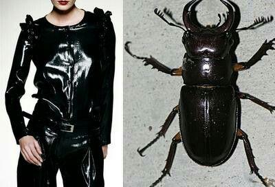 Quando la modo prende ispirazione dai colori e dalle forme degli insetti