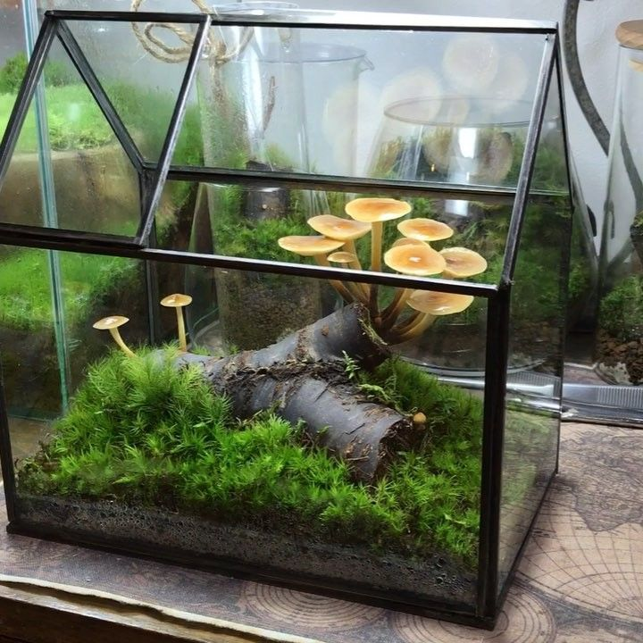 pin von johnny williamson auf gardening pinterest garten pflanzen und terrarium. Black Bedroom Furniture Sets. Home Design Ideas