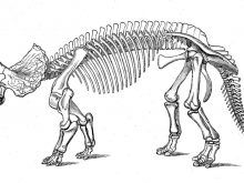 Dinosaur Skeleton Coloring Pages With Page Dinosaur Skeleton