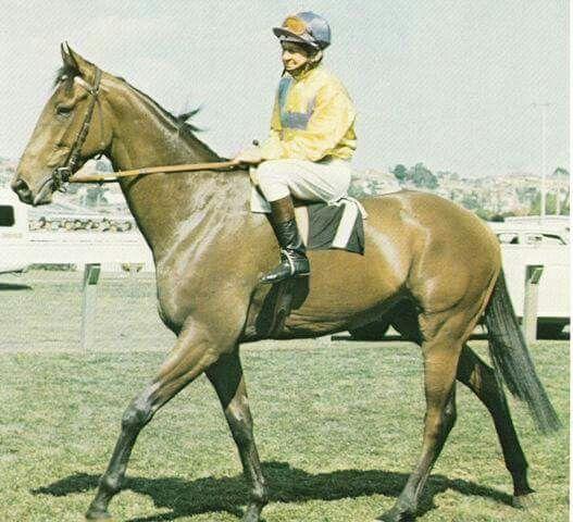 All Shot   Beautiful horses, Horses, Horse racing