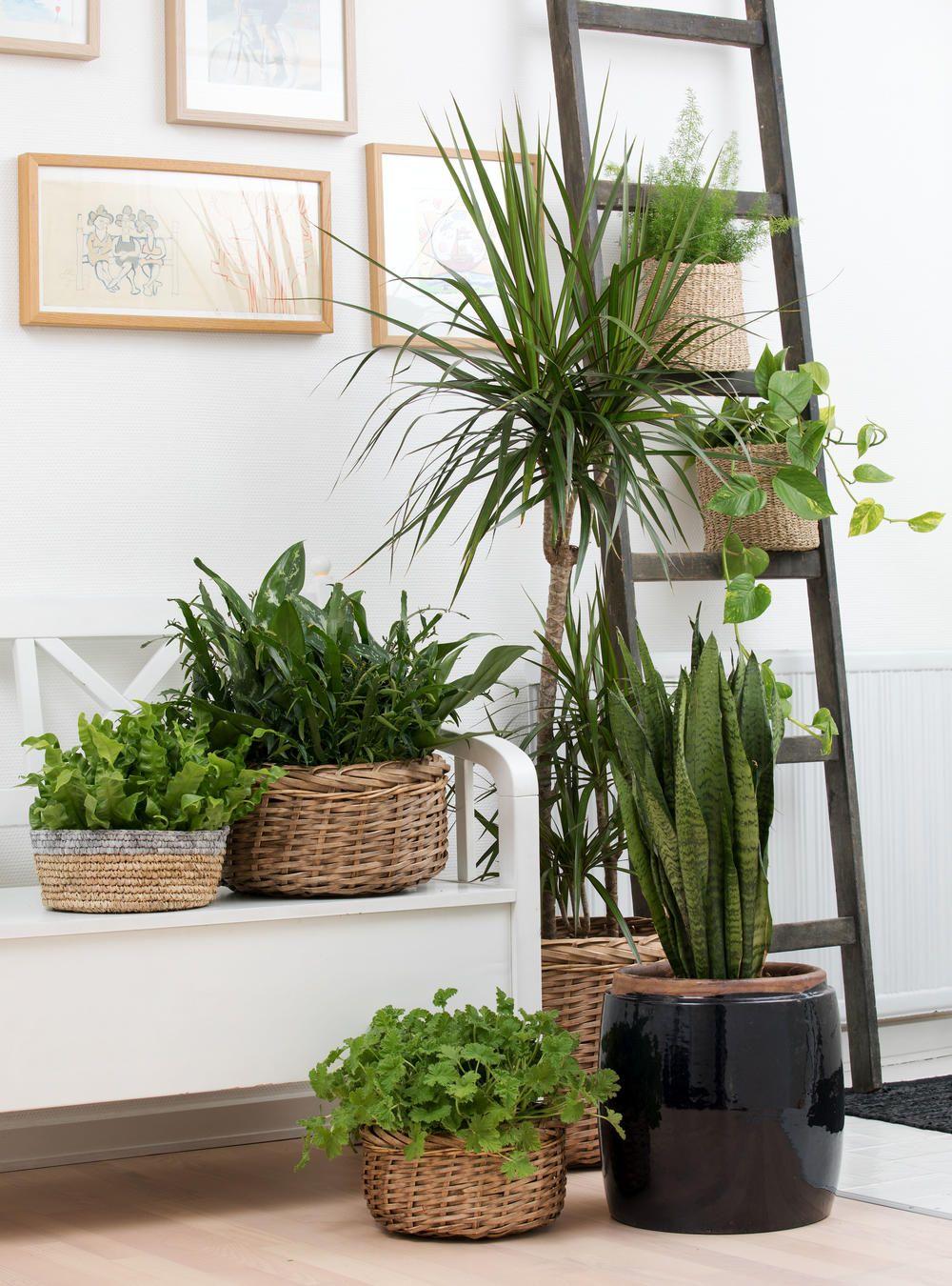 Exotische zimmerpflanzen tropenflair f r die wohnung for Kleine mucken in topfpflanzen