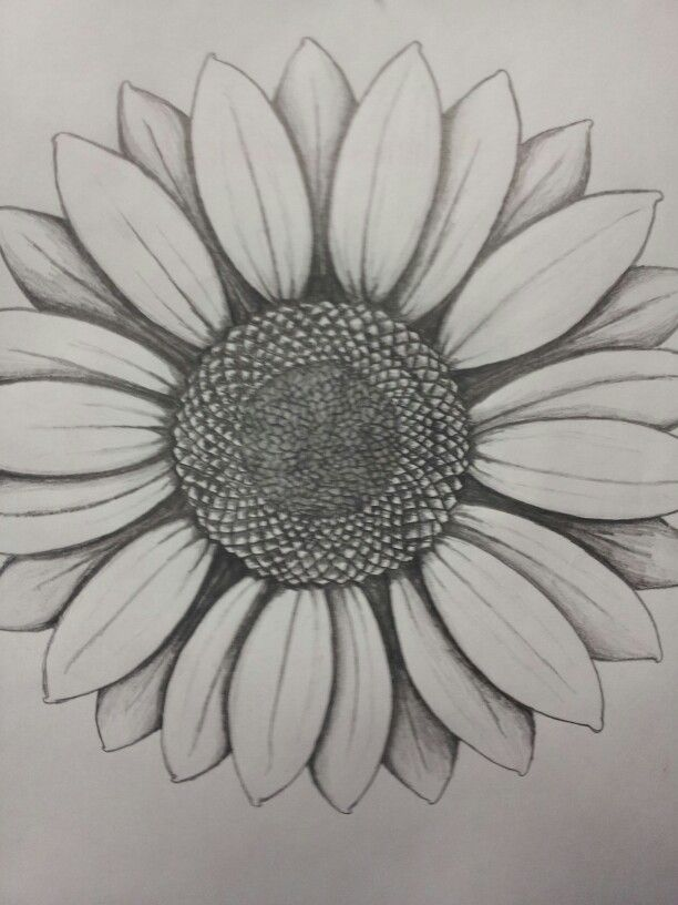 Drawings Of Sunflowers In Pencil sunflower … | Pinter...