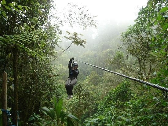 Zip lining through the canopies of Mindo cloud forest in Ecuador & Zip lining through the canopy of a rain forest in Ecuador - almost ...