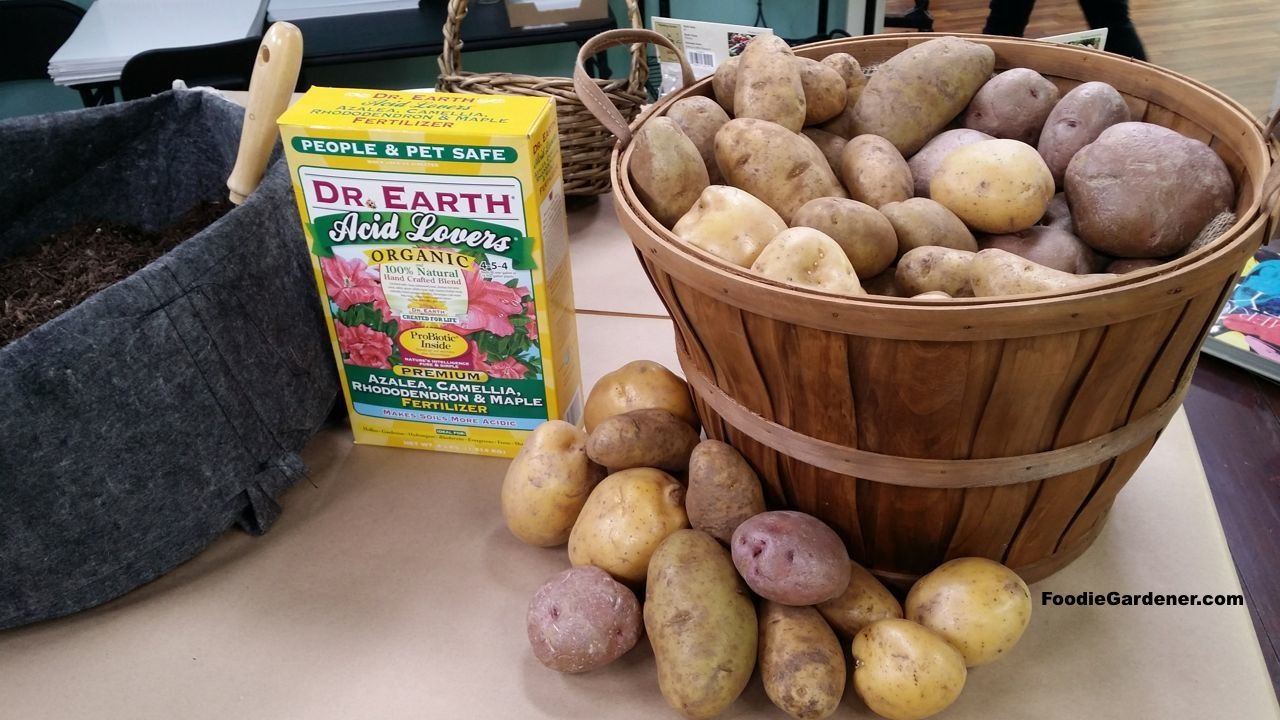 How to grow potatoes in a bag the foodie gardener
