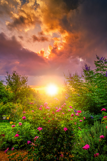 Morning Sunrise Beyond The Flower Garden The Sun Is Framed By Trees In This Lovely Photograph Nature Photography Beautiful Nature Beautiful Landscapes