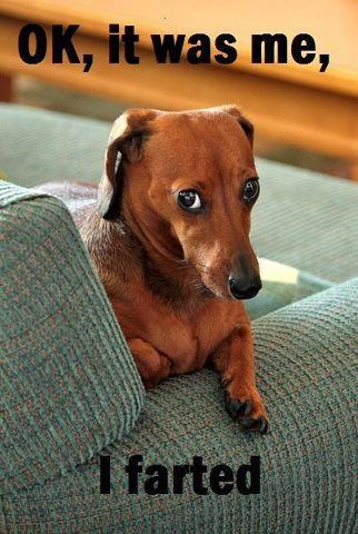 Top 10 Dachshund Photos On Pinterest Funny Dog Pictures Animal