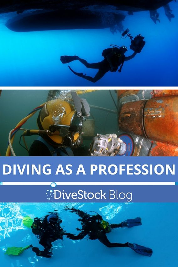 Diving as a profession | Diving, Blog, Professions