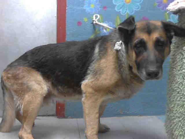 RED ALERT SENIOR ALERT This DOG IDA4643650 I am