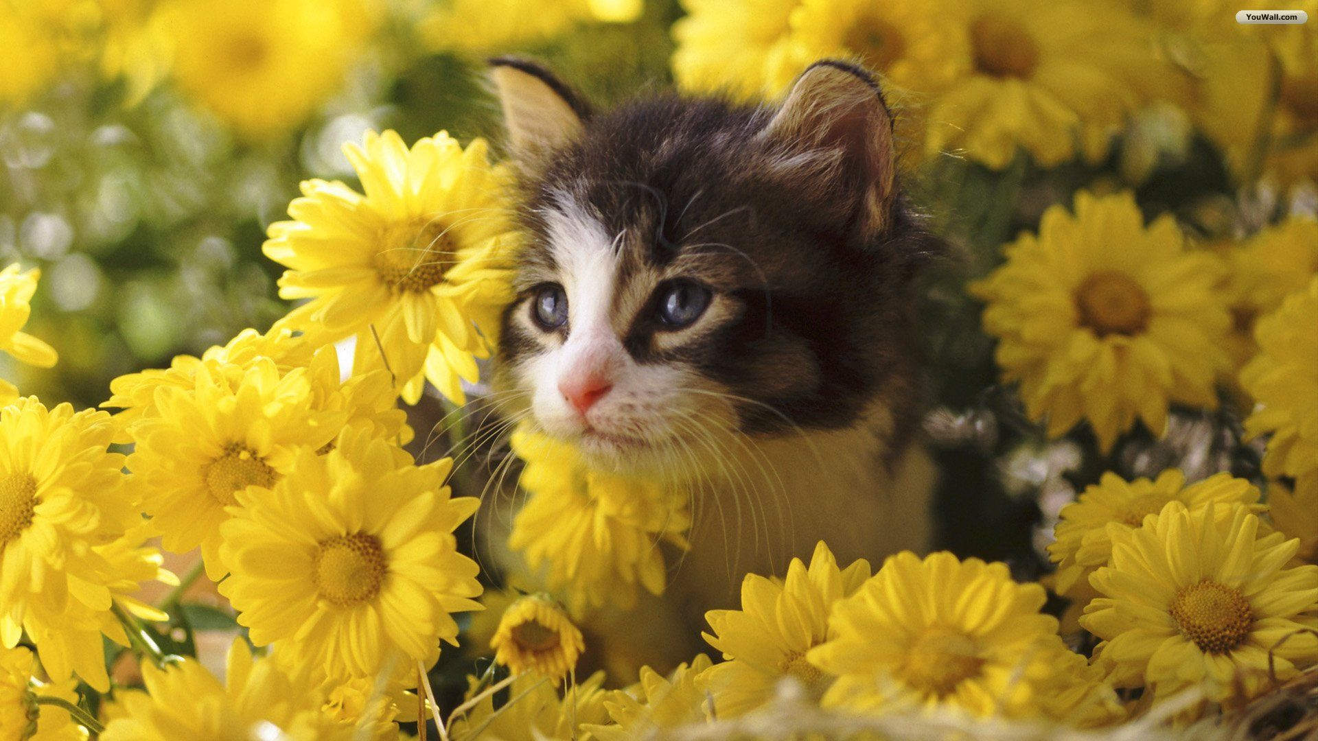 cats in flowers Cats wallpapers,Cats,Flowers