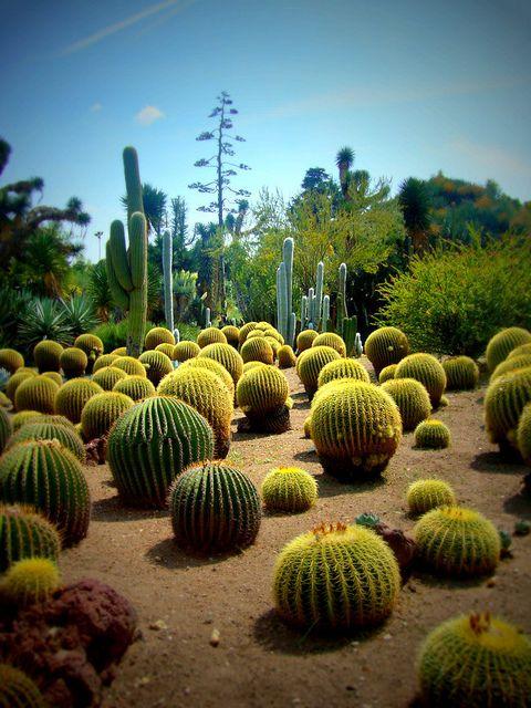Top Ten Easy To Grow Shade Loving Perennials Cactus Cactus