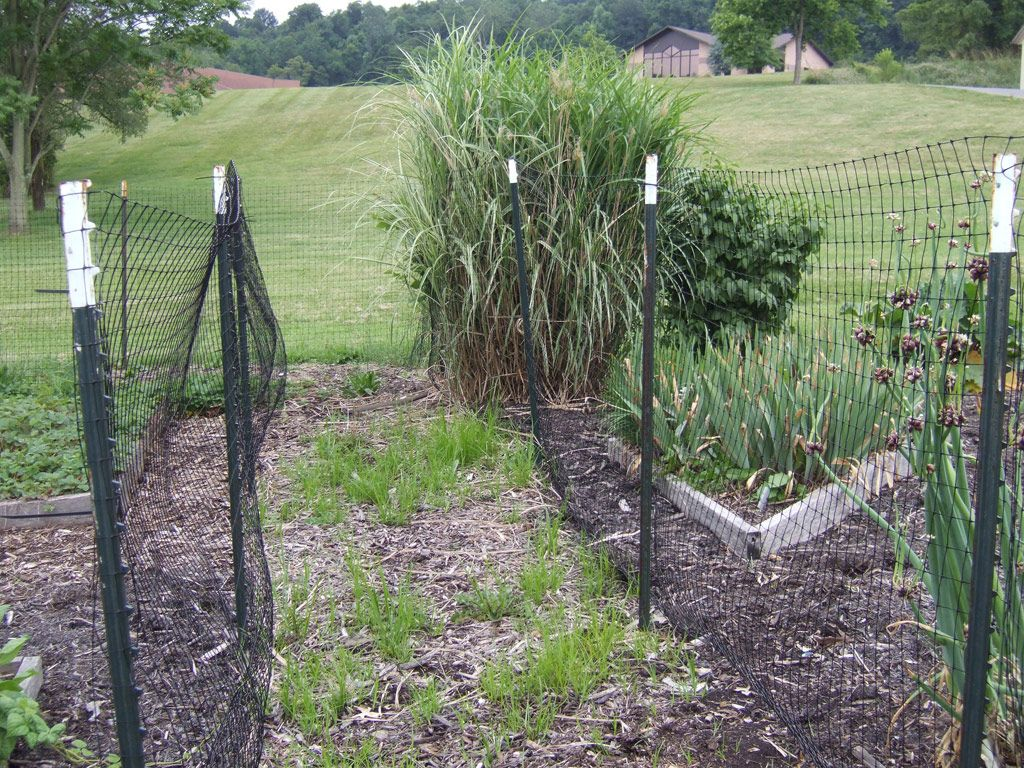 how to build an electric fence to keep raccoons away