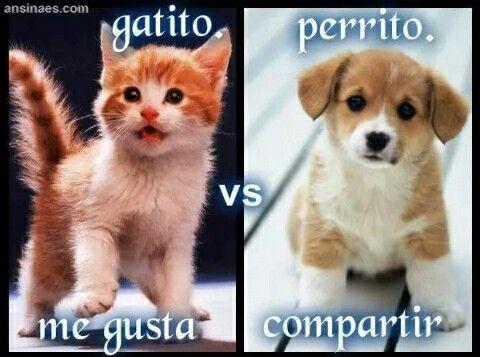 Pin De Mel En Animales Gato Vs Perro Memes Perros Perros
