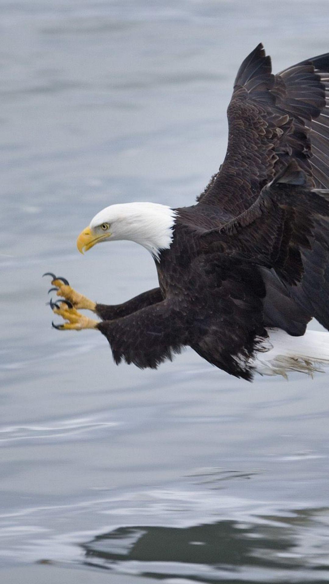 Bald Eagle Talons Eagles Eagle Pictures Bald Eagle Images Eagle Wallpaper