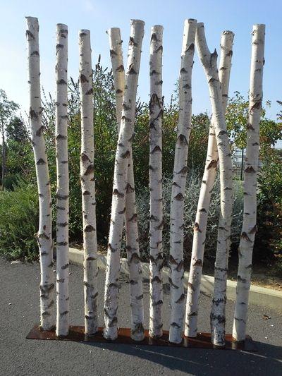 Paravent en troncs de bouleaux de 2m50 de hauteur d co - Tronc de bouleau ...