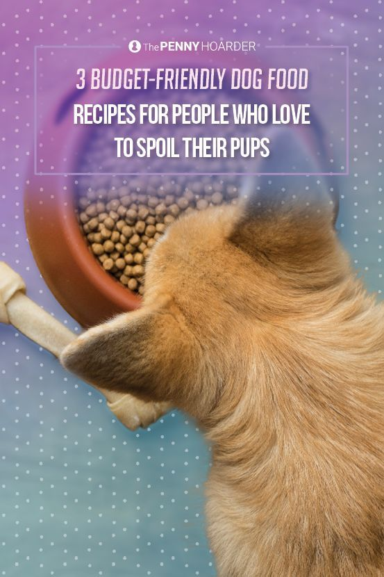 3 Budget Friendly Dog Food Recipes For People Who Love To Spoil