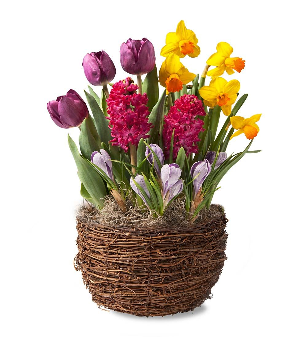 Purple Tulips, Hyacinths and Crocus Bulb Garden - Ships January-June 2017