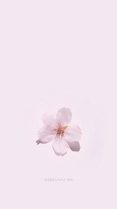 35 Telefon Tapeten Zu Machen Blumen Auf Dem Handy Wachsen Homelovein Beautifulflowerswallpa Flower Phone Wallpaper Phone Wallpaper Cute Wallpaper For Phone