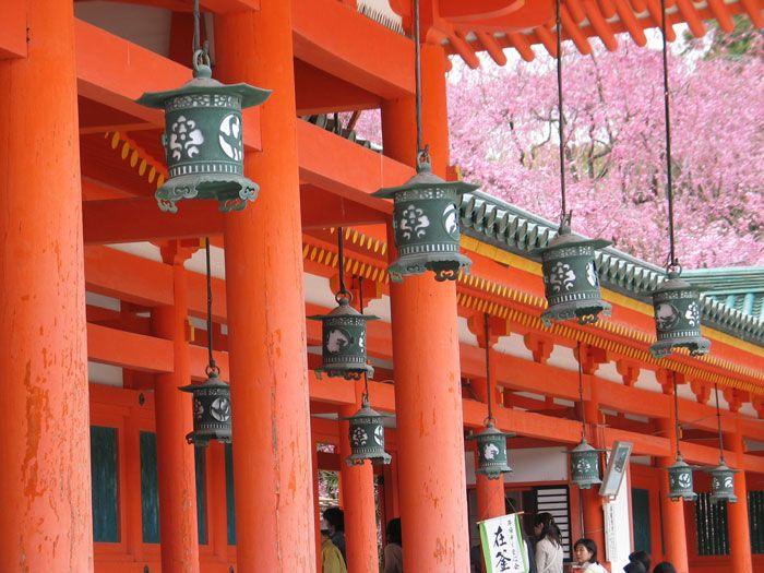 Sakura, Kyoto, Japan #travel #outdoor