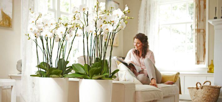 brussels decoraciones del hogar pinterest blumen orchideen und schlafzimmer. Black Bedroom Furniture Sets. Home Design Ideas