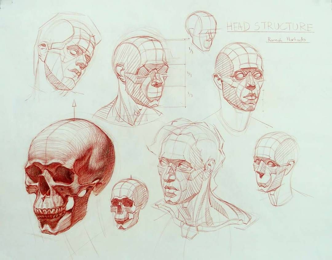 Line Drawing Of Human Face : Another head structure demo from awhile back the form of