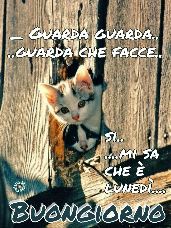 Link Buongiorno Divertenti Immagini Cat Buon Lunedi Inizio