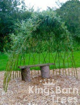Living Willow Arbour Kits مزرعة Garden