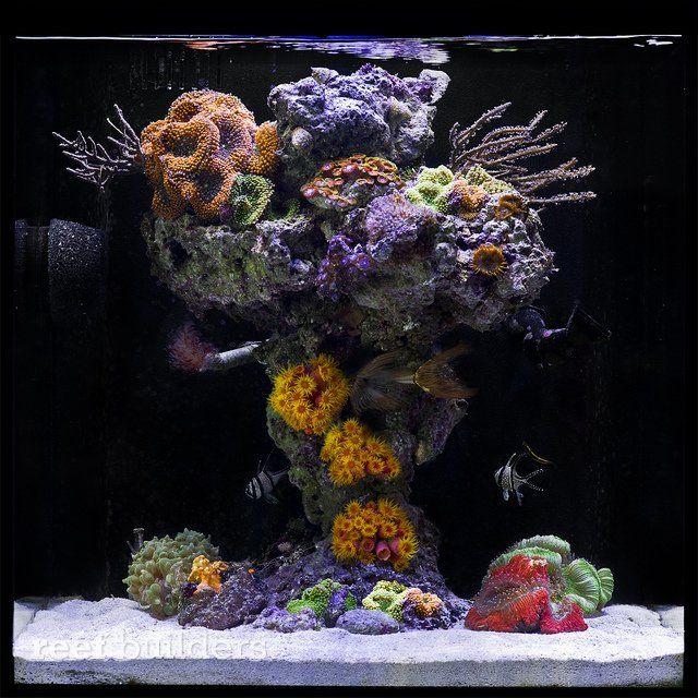 "John Ciotti's ""Upside Down Reef"" nano tank"