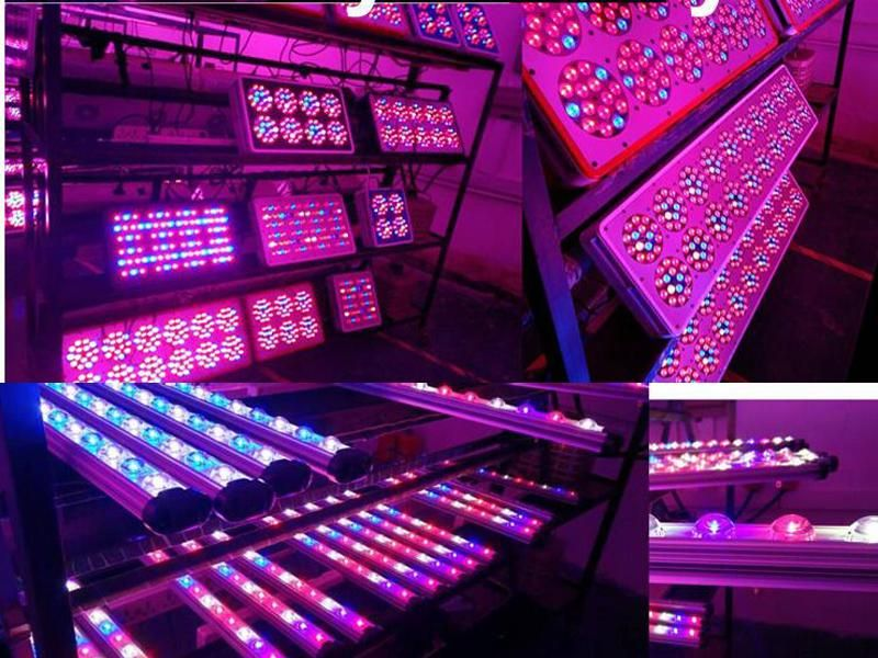 1000 Watts Led Grow Lights Are Revolutionising The Way We Grow Indoors They Consume Less Power By Delivering Only Th Grow Lights Led Grow Lights Led