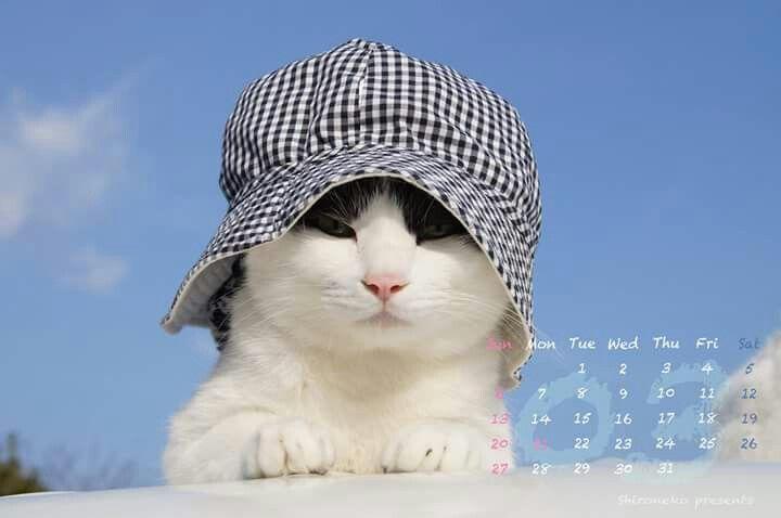 かご猫 〜cafe:2016年03月カレンダー〜  春種の 匂いくすぐる 花粉症…弥生