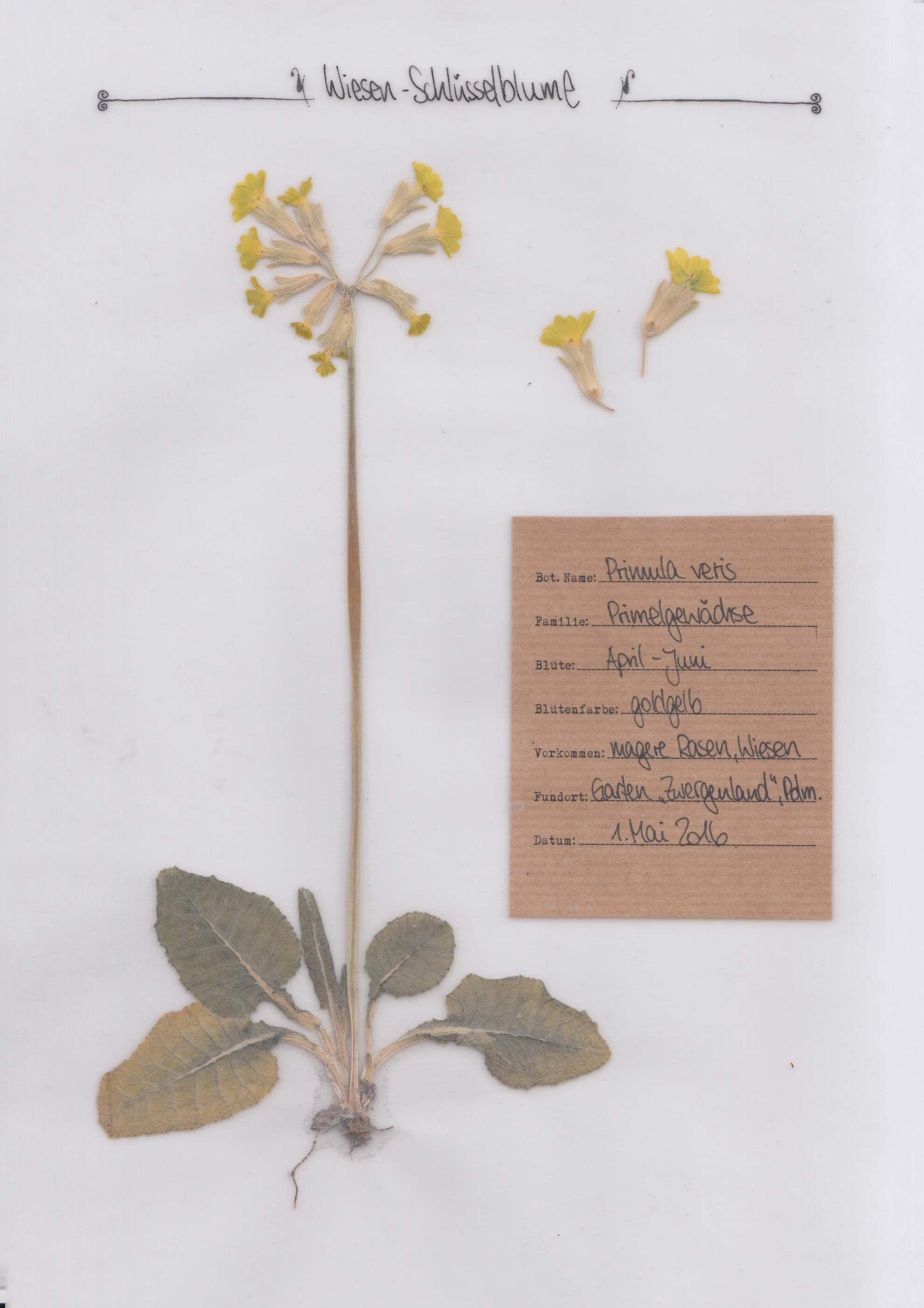 Deckblatt Schule Schule Dieses Herbarium 15