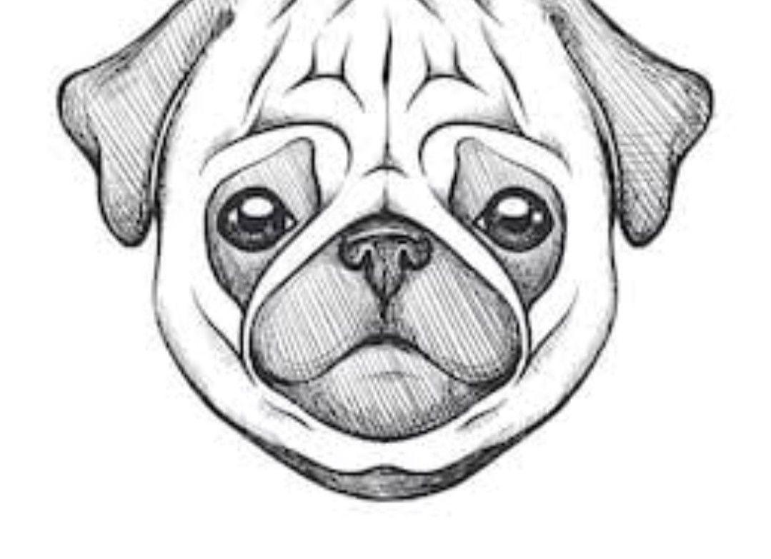 Pin By Malon Van Raaij On Zoya Dog Sketch Puppy Sketch Cute Sketches