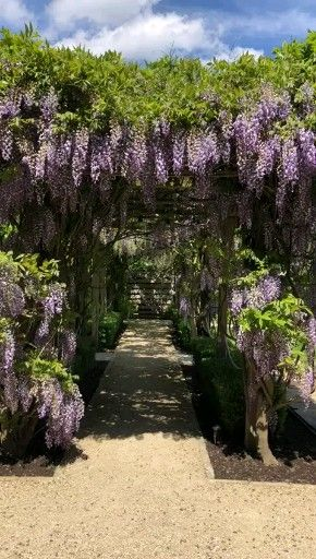 Photo of Wisteria bryllupsgang