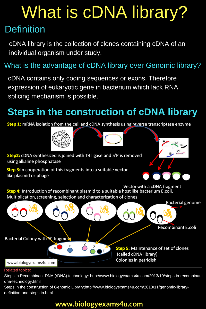 poster cdna library: definition and steps in the construction of