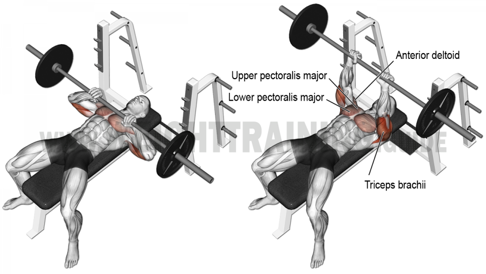 Comment effectuer le d velopp couch barre prise serr triceps anatomie musculation bras - Programme force developpe couche ...