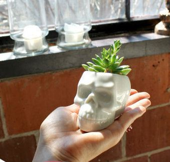 Dead Skull Succulent Pot | White Ceramic Mini Plants Pots DIY Potted Cactus  Desktop Balcony Plant