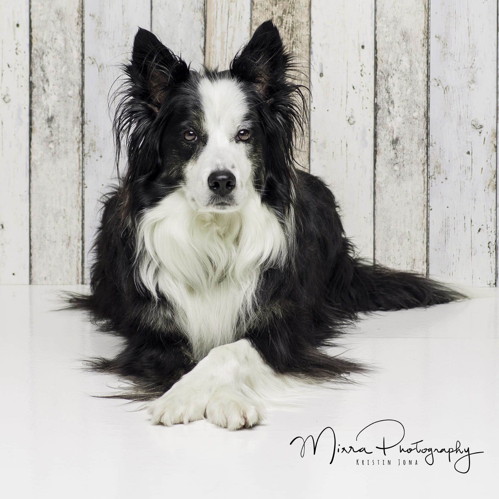 Border Collie, beauty (With images) Dog people, Dog