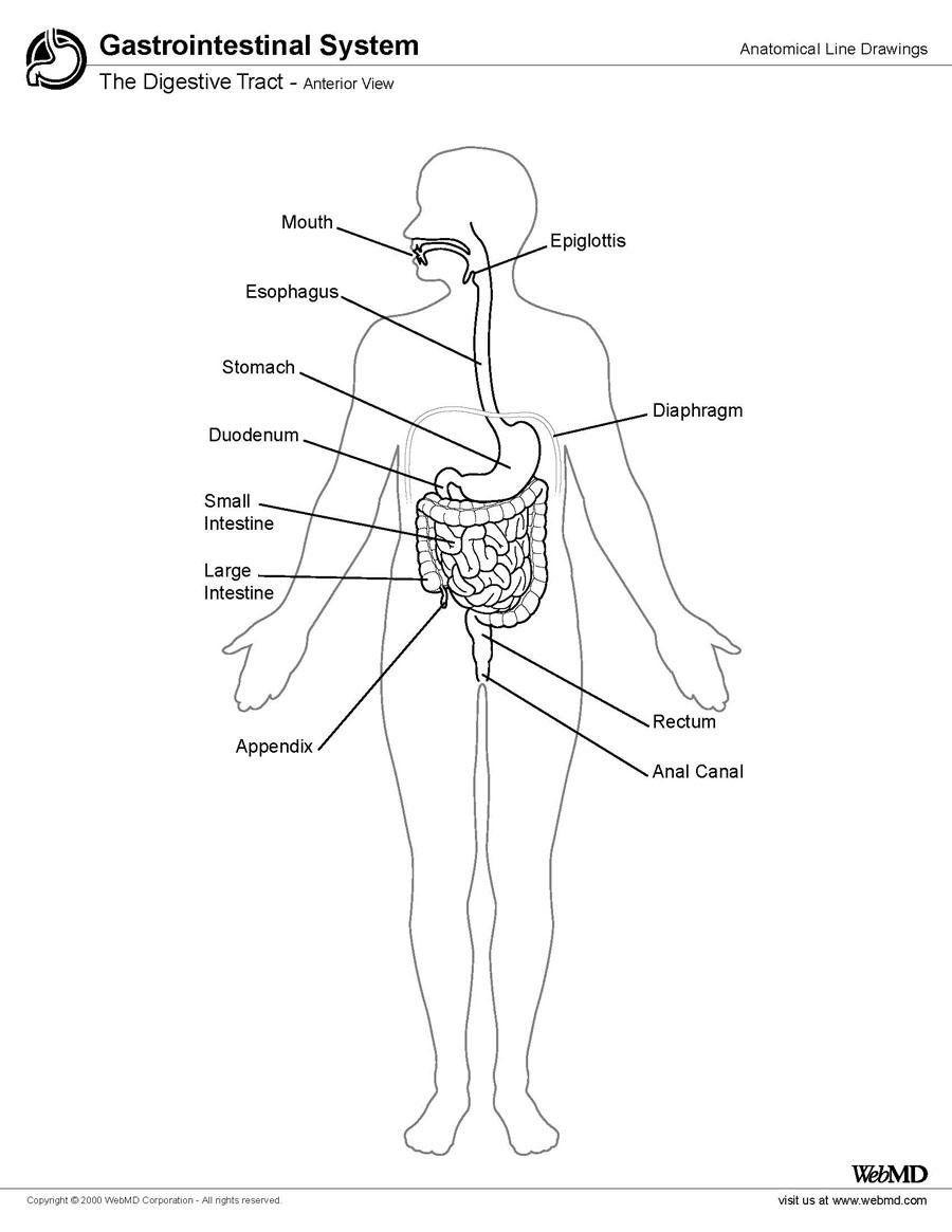 Lower Gi Tract Anatomy Overview Gross Anatomy Microscopic Anatomy