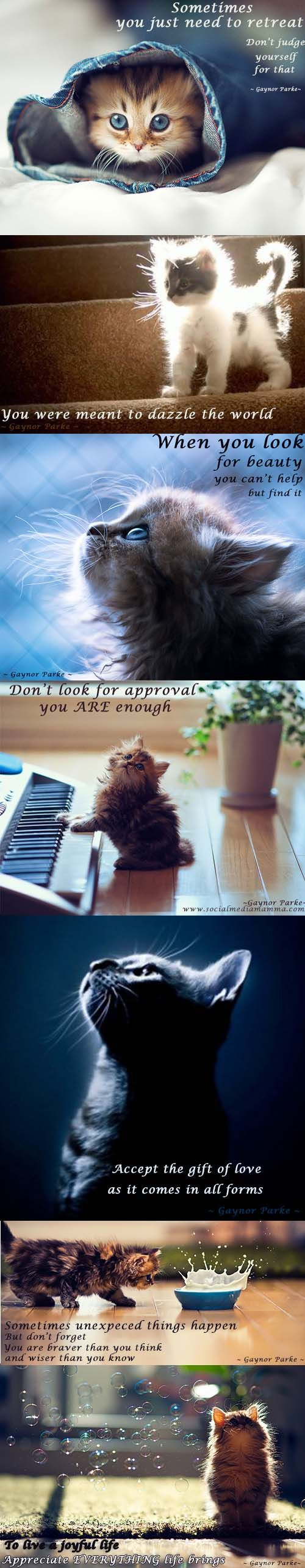 Encouragingwords Animals Can Teach Us So Much Inspirational