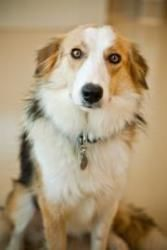 Adopt Ramona On Petfinder Big Dog Little Dog Collie Dog Little Dogs