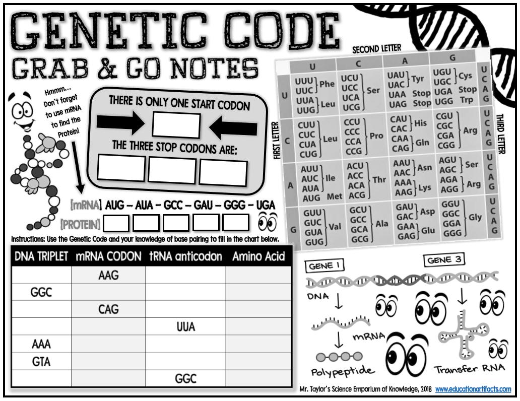 The Genetic Code Worksheet - Nidecmege