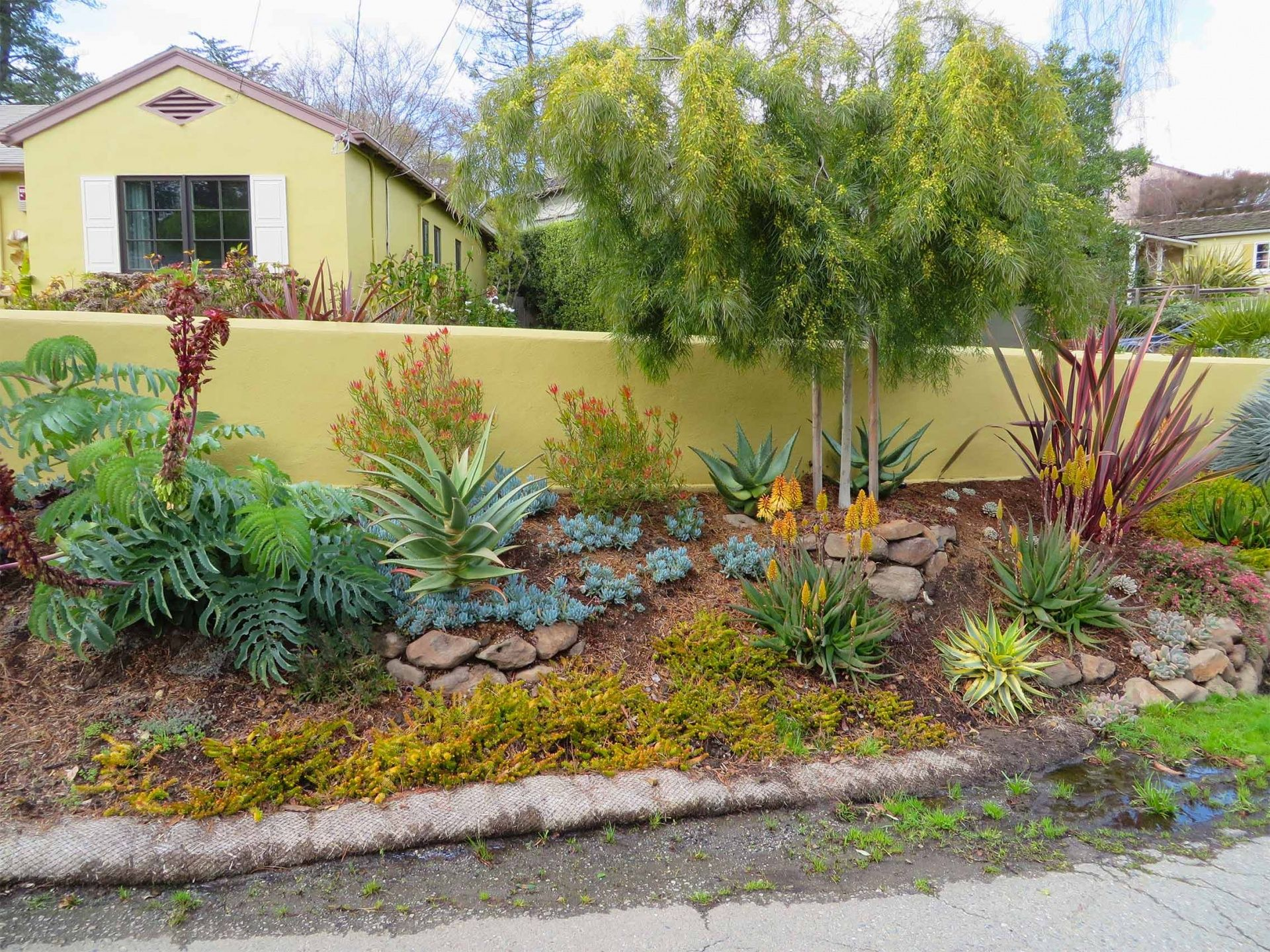 Amazing Succulents And Low Water Gardens Archives | Magic Gardens LandscapingMagic Gardens  Landscaping