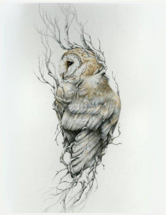 Barn owl -11 x 14 reproduction of original drawing в 2020 ...